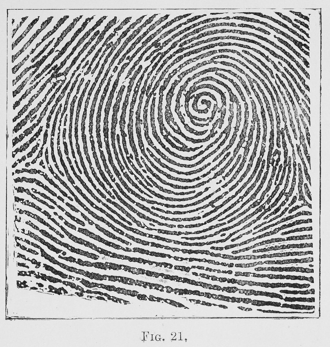 Arch Fingerprint Pattern